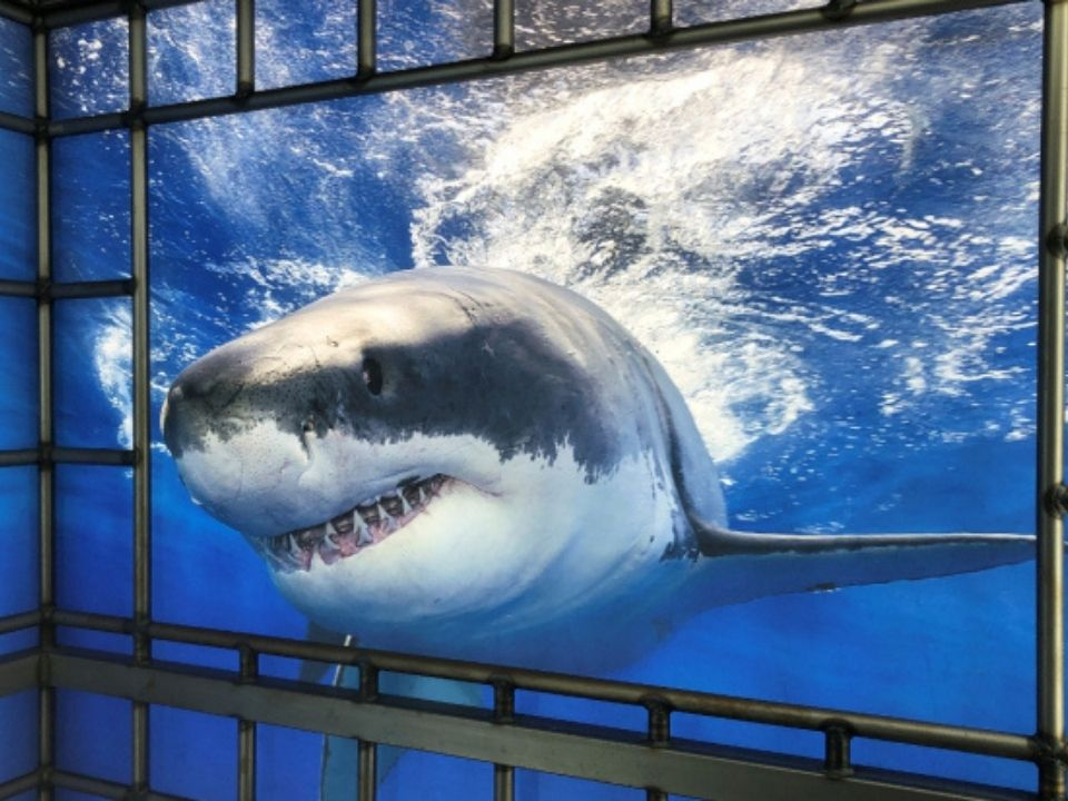 Shark Reef adds Undersea Explorer VR Experience